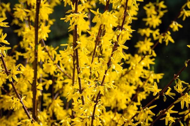 Piękne ujęcie żółte kwiaty