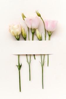 Piękne układanie kwiatów