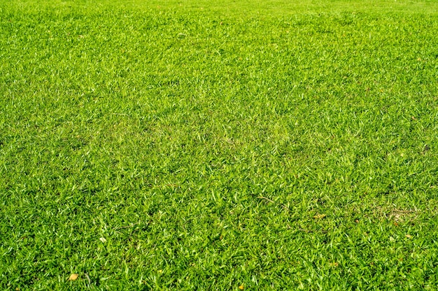Piękne użytki zielone w lecie