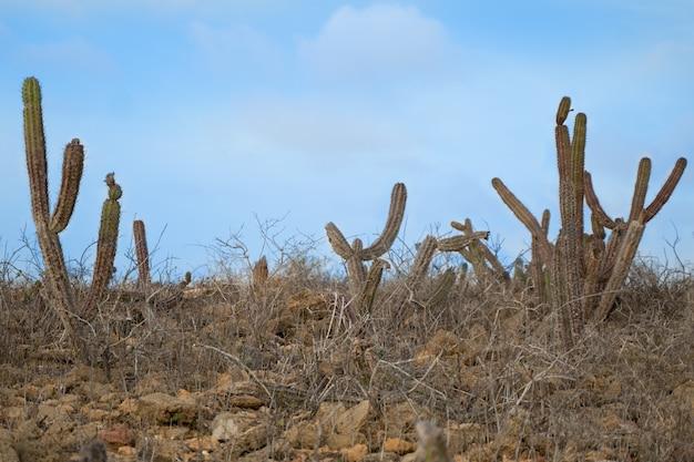 Piękne widoki, pustynna górska sceneria, wydmy z kaktusem