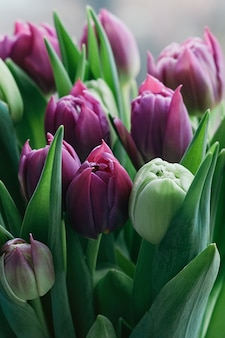 Piękne wiosenne kwiaty niewyraźne tło