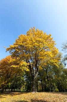 Piękne wysokie drzewo na wzgórzu