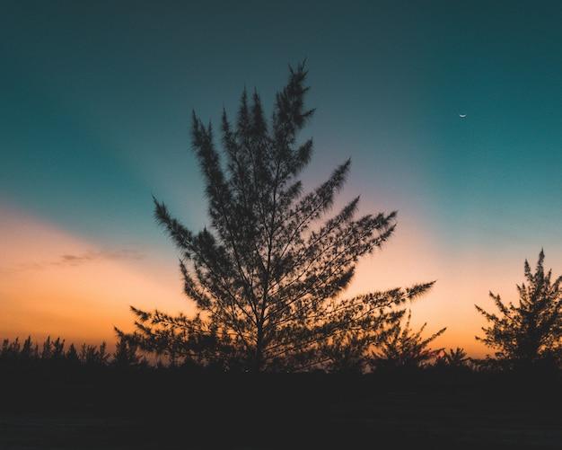 Piękne wysokie drzewo w polu z niesamowitym zachodem słońca