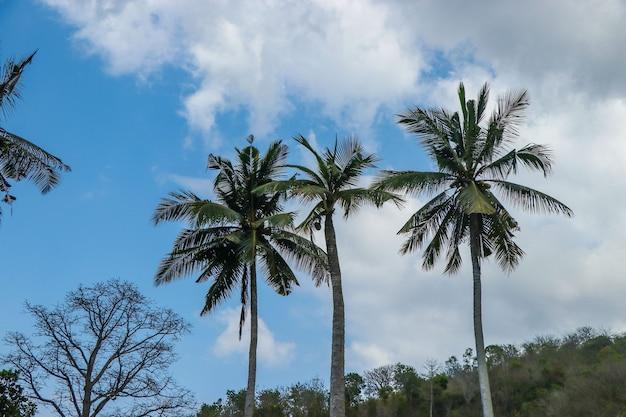 Piękne wysokie palmy kokosowe na tle nieba i chmur na bali, indonezja, orientacja pozioma