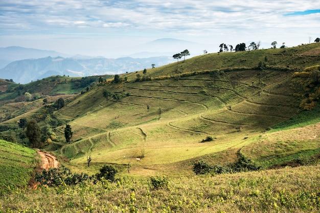 Piękne wzgórze trawiaste ze światłem słonecznym świeci w parku narodowym