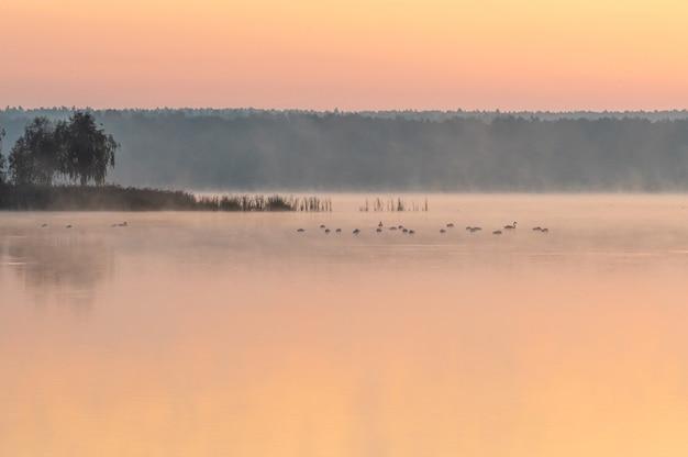 Piękne zdjęcie jeziora podczas zachodu słońca z ptakami