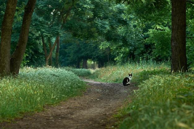Piękne zielone drzewa leśne z kotem na ścieżce.