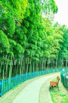 Piękne zielone gałęzie jasny jasny