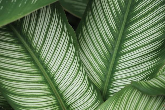 Piękne zielone liście