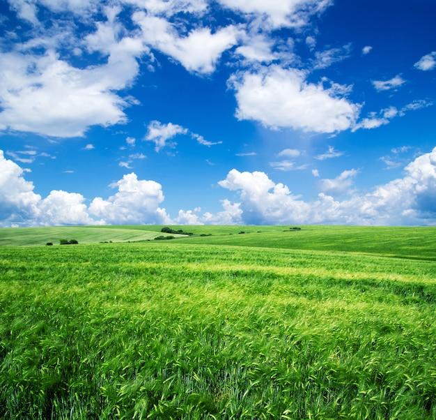 Piękne zielone pole i błękitne niebo z chmurami