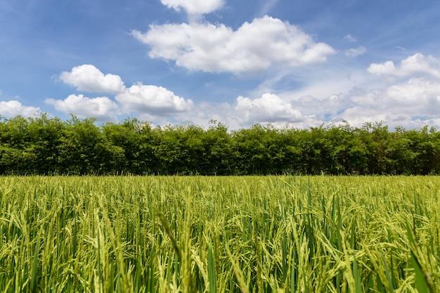 Piękne zielone pole w okolicy z błękitnym niebem w tle.