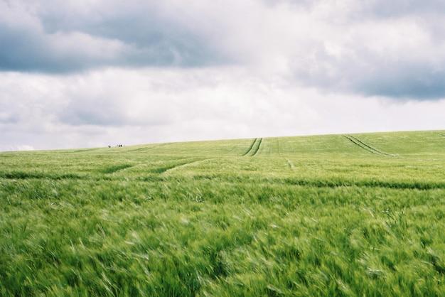 Piękne zielone pole z niesamowitym pochmurnym białym niebem