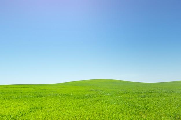Piękne zielone pole
