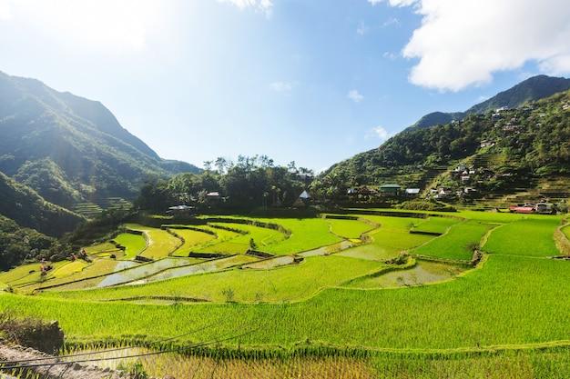 Piękne Zielone Tarasy Ryżowe Na Filipinach. Uprawa Ryżu Na Wyspie Luzon. Premium Zdjęcia