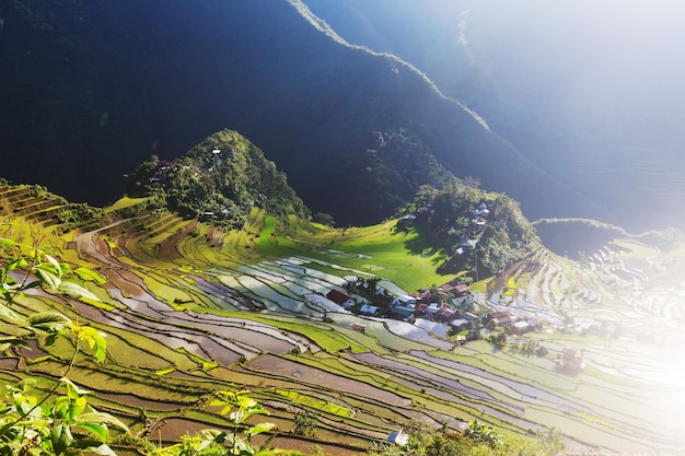 Piękne zielone tarasy ryżowe na filipinach. uprawa ryżu na wyspie luzon.