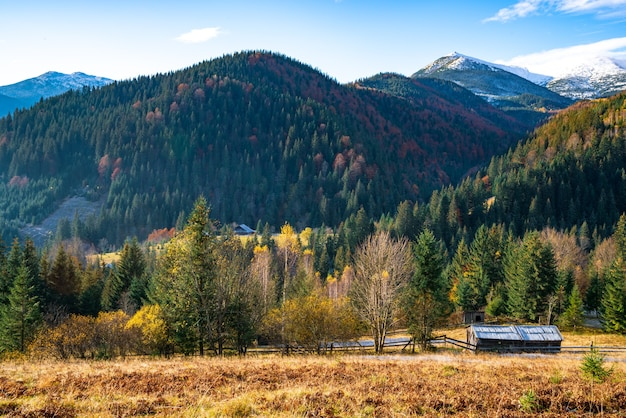 Piękne zielone wzgórza porośnięte kolorowymi jesiennymi drzewami we wspaniałych karpatach na malowniczej ukrainie