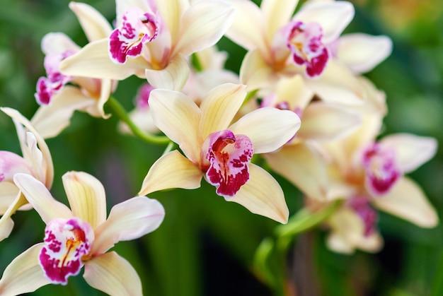 Piękne żółte kwiaty orchidei w ogrodzie botanicznym