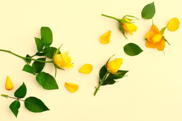 Piękne żółte róże z zielonymi liśćmi i płatkami na żółto