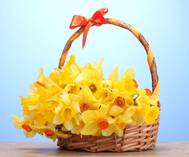 Piękne żółte żonkile w koszu z kokardą na drewnianym stole na niebieskim tle