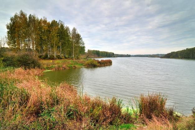 Pięknego jesień krajobrazu trawy żółci liście