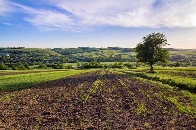 Pięknej pokojowej wiosny szeroka panorama zieleni pola rozciąga się horyzont pod jasnym jaskrawym niebieskim niebem z dużym zielonym drzewem na odległych wzgórzach i wioski tle. rolnictwo i koncepcja rolnictwa.
