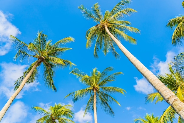 Pięknej przyrody tropikalne palmy kokosowe na błękitne niebo biała chmura wokół plaży oceanu morskiego