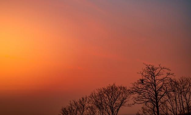 Pięknej sylwetki bezlistny drzewo i zmierzchu niebo