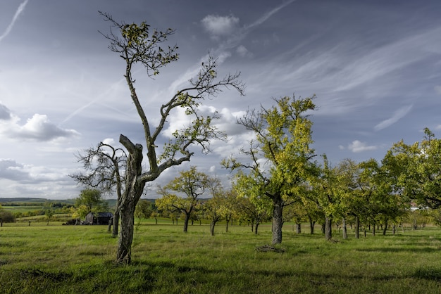 Piękni drzewa na polu zakrywającym z trawą z chmurnym niebem