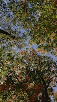Piękni jesieni drzewa z kolorowymi liśćmi na jasnym niebieskim niebie