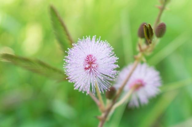Piękni mali biali kwiaty w lesie