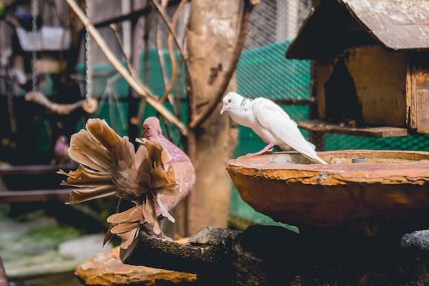 Piękni ptaki przy tropikalnym zoo.