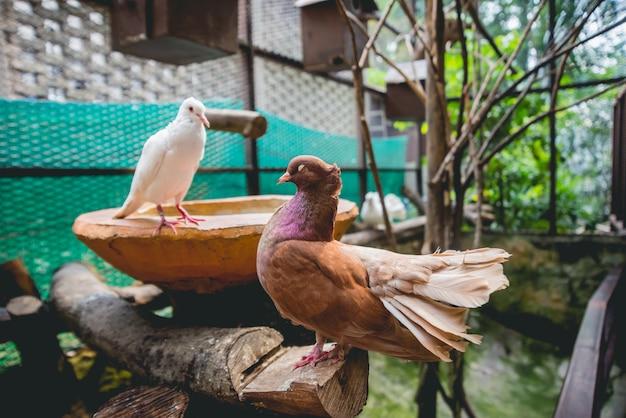 Piękni ptaki przy tropikalnym zoo