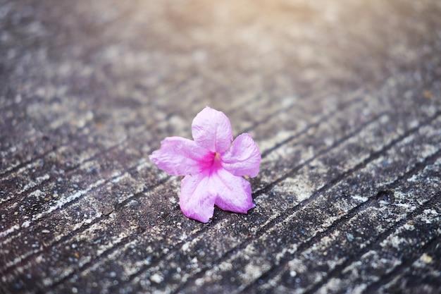 Piękni różowi kwiaty z światłem słonecznym spada na betonowej podłoga w ogródzie