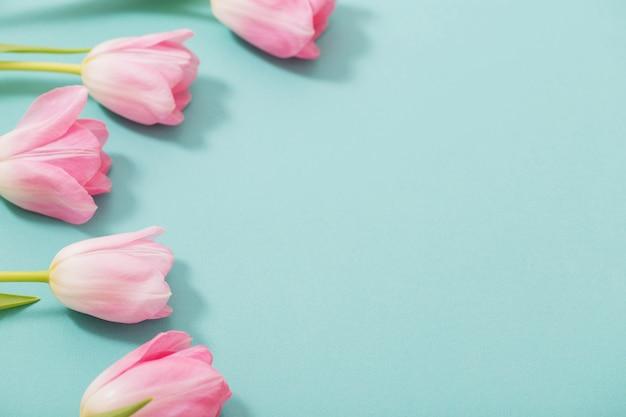 Piękni różowi tulipany na błękita mennicy tle