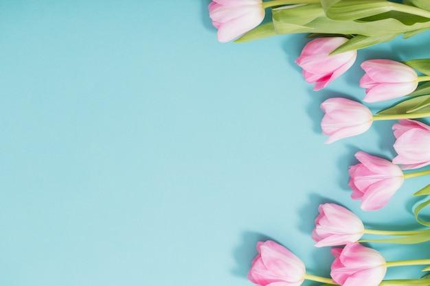 Piękni różowi tulipany na błękitnym tle