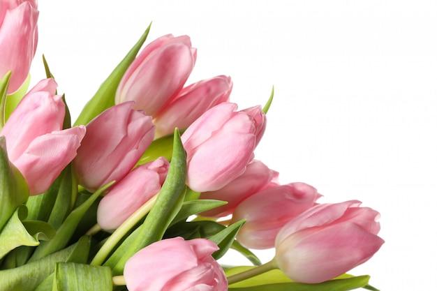 Piękni różowi tulipany odizolowywający na bielu, zamykają up