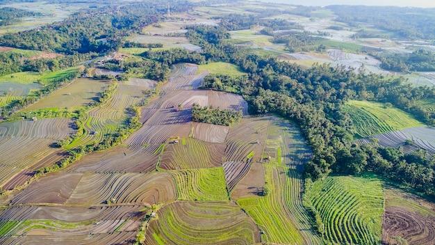 Piękni ryżowi tarasy w ranku zaświecają blisko tegallalang wioski, ubud, bali, indonezja.