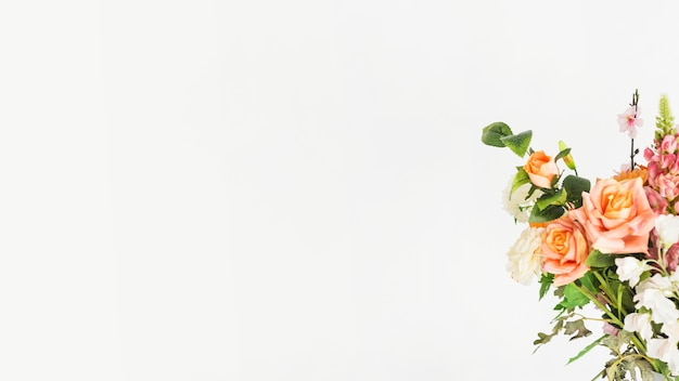 Piękni świezi kwiaty na białym tle