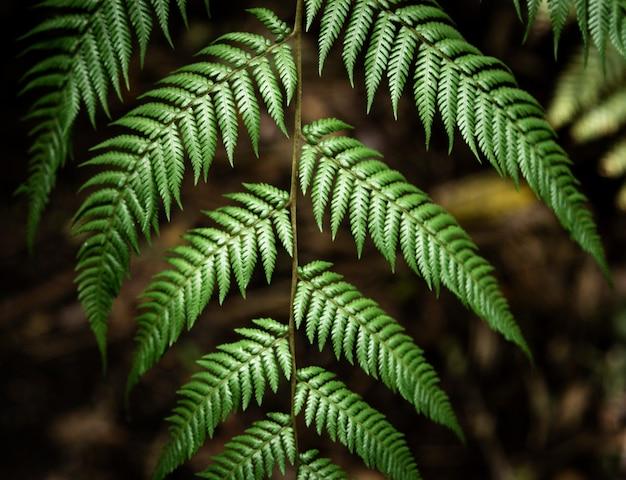 Piękni tropikalni liście z zamazanym tłem