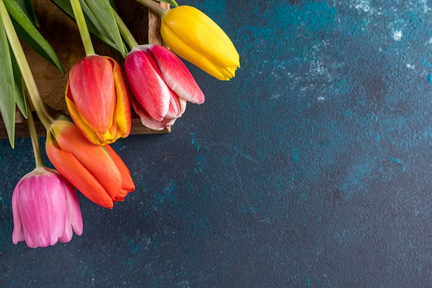 Piękni tulipany na nieociosanym jaskrawym koloru błękita tle