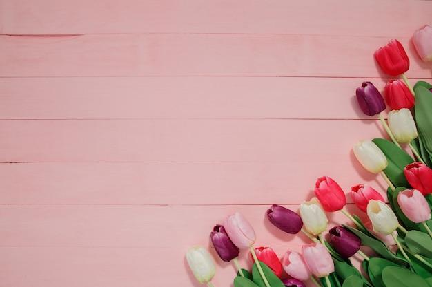 Piękni tulipany na różowym tle.