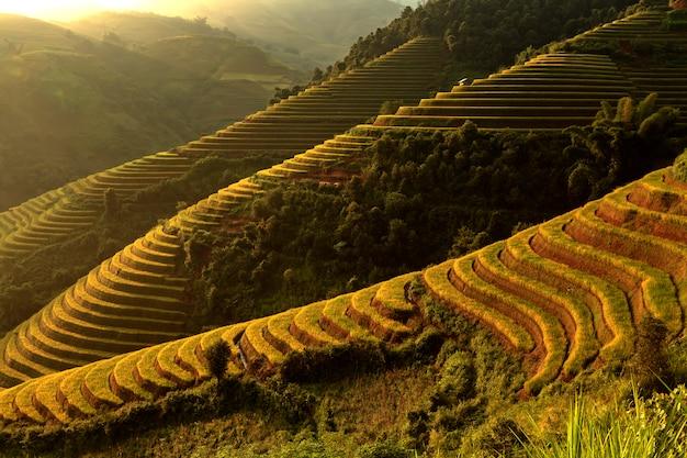 Piękni złoci ryżowi tarasy w mucanchai yenbai wietnam.