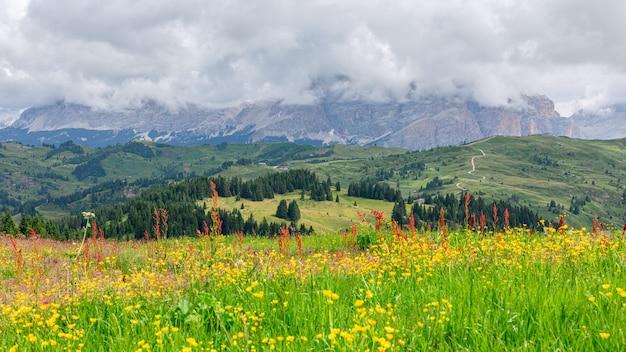 Pięknie kwitnąca alpejska łąka na pierwszym planie i włoskie dolomity pokryte niskimi chmurami w tle.