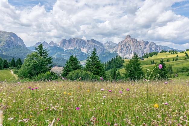 Pięknie kwitnąca alpejska łąka na pierwszym planie i włoskie dolomity w tle.