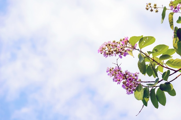 Piękno i kolorowe kwiaty na tle nieba.