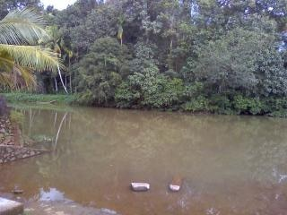 Piękno kerala, w dżungli