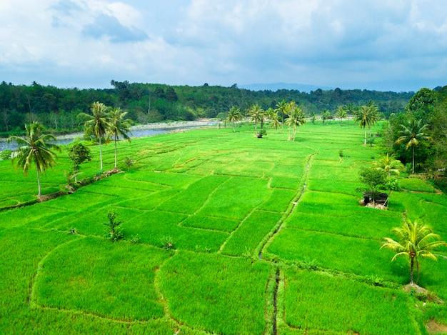 Piękno pola ryżowego z pięknego lotu ptaka w ciągu dnia z zielonym ryżem i rzeką w lesie w azji