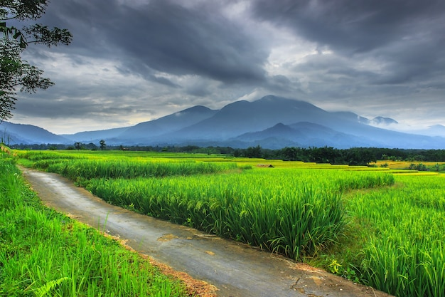 Piękno poranka z panoramicznym widokiem na zielone pola ryżowe i zachmurzone czarne niebo w bengkulu.