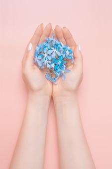 Piękno ręka kobieta z błękitnymi kwiatami kłama na stole, różowy tło. kosmetyki naturalne i pielęgnacja dłoni, nawilżanie i redukcja zmarszczek, pielęgnacja skóry