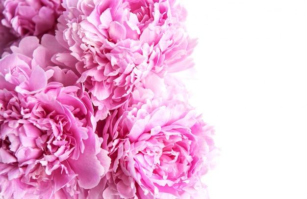 Piękno różowe kwiaty piwonii